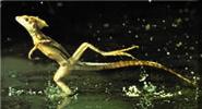 lizard-brain-flee
